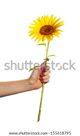 someone give away a sunflower in front of a white backgound