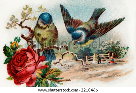 Song birds - winter scenic - circa 1910 vintage illustration - stock photo