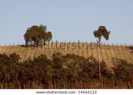 Sonoma Valley, California, USA - stock photo