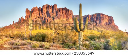 Sonoran Desert, Saguaros and Brittlebush catching day's last rays. - stock photo
