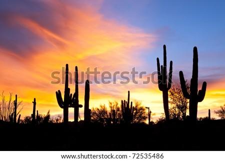 Sonoran Desert sunset. - stock photo
