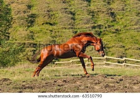 Sorrel horse galloping in autumn field