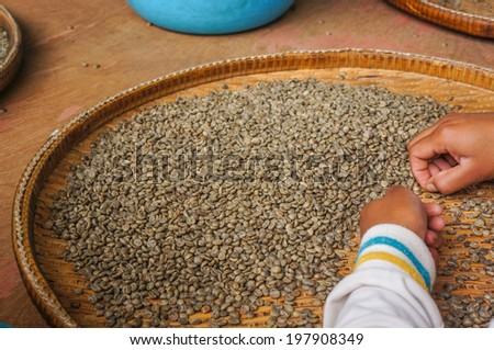 Sorting coffee beans - stock photo