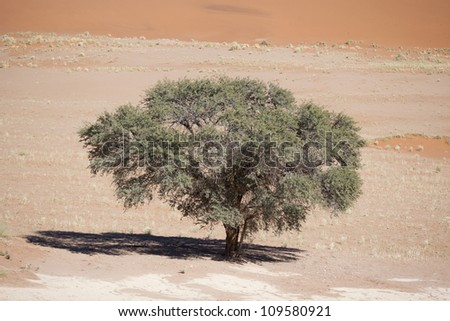 Sossusvlei and one camelthorntree