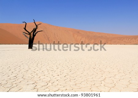 Sossusvlei dead valley landscape in the Nanib desert near Sesriem, Namibia
