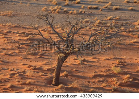 sossusvlei  red desert  in Namibia