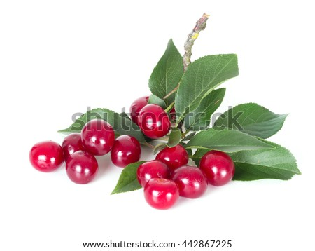 Sour cherries on white background with leaf. Highly nutritious fruit, often found wild. Prunus cerasus. - stock photo