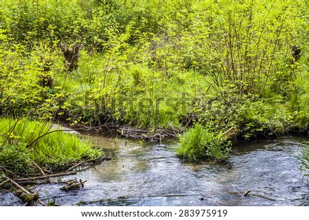 Source of river among bushes at spring. Springtime landscape with fresh young leaves on tree branches, nature backgrounds in may or june. - stock photo