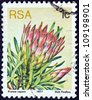 """SOUTH AFRICA - CIRCA 1977: A stamp printed in South Africa from the """"Succulents"""" issue shows Protea repens, circa 1977. - stock photo"""