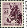 SOUTH AFRICA - CIRCA 1954: A stamp printed in South Africa, is depicted Mountain zebra (Equus zebra), circa 1954 - stock photo