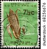 SOUTH AFRICA - CIRCA 1953: A stamp printed in South Africa shows maize, circa 1953 - stock photo