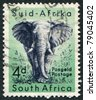 SOUTH AFRICA-CIRCA 1954: A stamp printed in the South Africa, depicts animals from Kruger National Park, the African Elephant, circa 1954 - stock photo