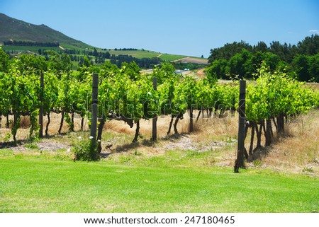 South Africa vineyard valley landscape, Western Cape
