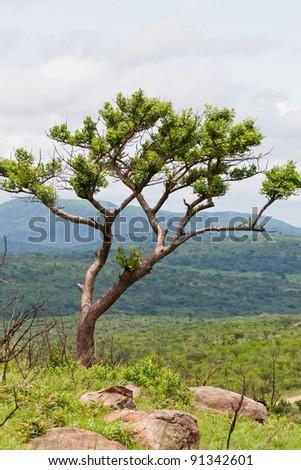South African savannah at Hluhluwe-iMfolozi Reserve, KwaZulu Natal - stock photo