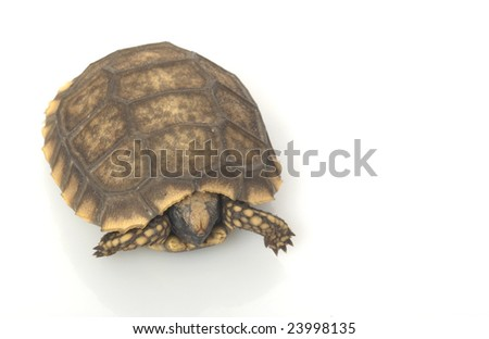 South American Yellow-footed Tortoise (Geochelone denticulata) isolated on white background.