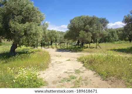 South Crete in April. Rain was falling and the vegetation is everywhere green. It is one of the most beautiful times on the Island. In the landscape, you have green fields and olive grooves. - stock photo