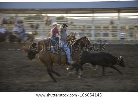SOUTH DAKOTA - AUG 10: Cowboys lassoing cow at PRCA Rodeo at Lower Brule, Lyman County, Lower Brule Sioux Tribal Reservation, South Dakota, 58 miles Southeast of Pierre near Missouri River, August 10, 2007 - stock photo