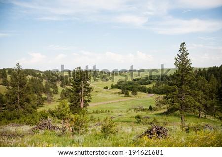 South Dakota Landscape in the Black Hills. - stock photo