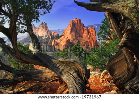 South Gateway Rock formation framed by twisted Juniper Trees at the Garden of the Gods Park in Colorado Springs, Colorado