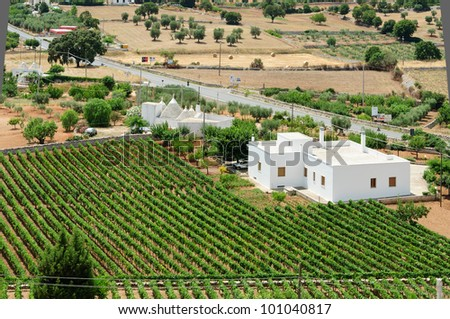 South italian mediterrean country with grapevine and white houses.