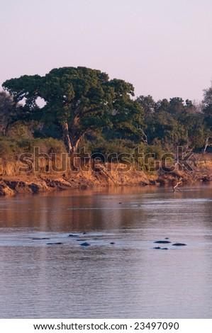 South Luangwa river in Zambia - stock photo
