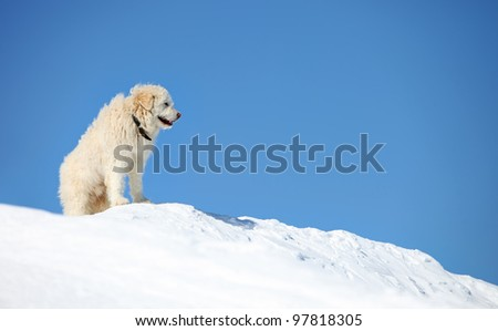 South Russian shepherd dog on snowy slope - stock photo
