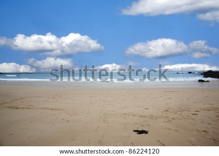 south Sydney beach side in the shire - stock photo