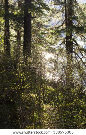 Southeast Alaska rainforest in spring with glowing light through the trees. - stock photo