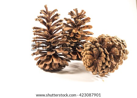 Southern Pine Cones