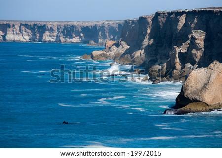Southern Right Whale Bunda cliffs Nullarbor Plain South Australia - stock photo