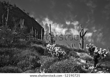 Southwest desert scene in Black and White