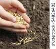 sowing oats - stock photo