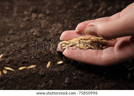 sowing seed - stock photo