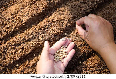 Sowing seed. Close up farmer hand sawing seed on back soil with sunlight background in morning time