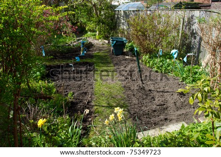 sowing seeds in Urban vegetable patch in domestic english garden - stock photo