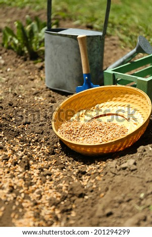 Sowing seeds into soil - stock photo