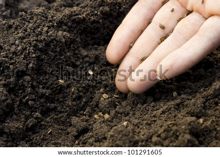 sowing seeds into the ground - stock photo