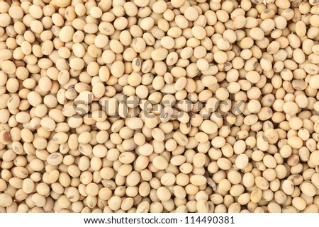 soy bean background - stock photo