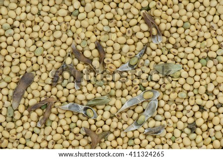 Soy bean organic for background and texture - stock photo