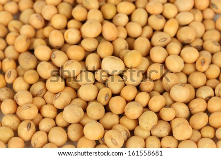 Soy beans close-up - stock photo