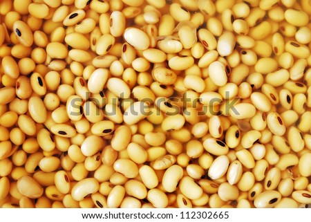 Soy beans in water before make soy milk