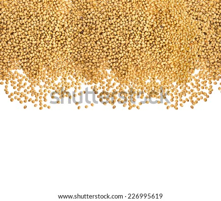 Soy beans on white background for wallpaper - stock photo