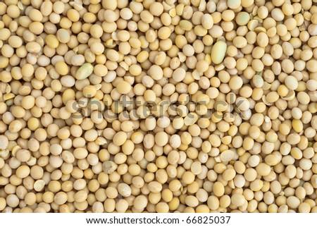 soybean - stock photo
