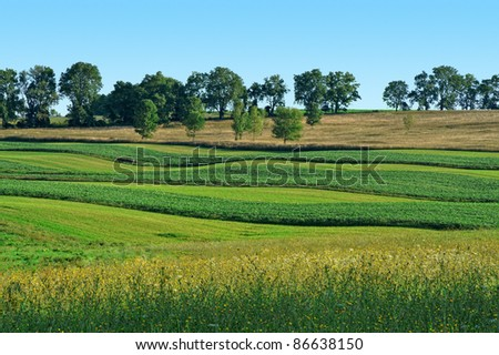 Soybean and Hay Field - stock photo