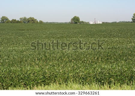 Soybean Cultivation as Healthy and Nutritious Agriculture - stock photo