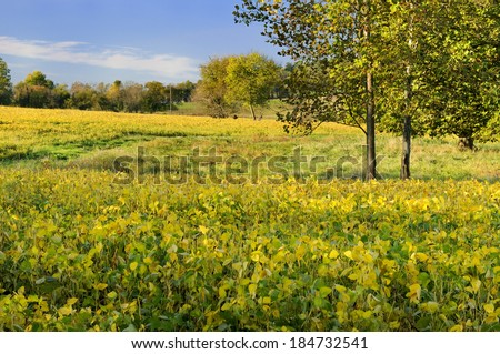 Soybean Field in Fall - stock photo