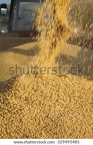 Soybean harvesting with blur  motion, pouring crop to tractor trailer - stock photo