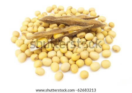 soybean isolated on white - stock photo
