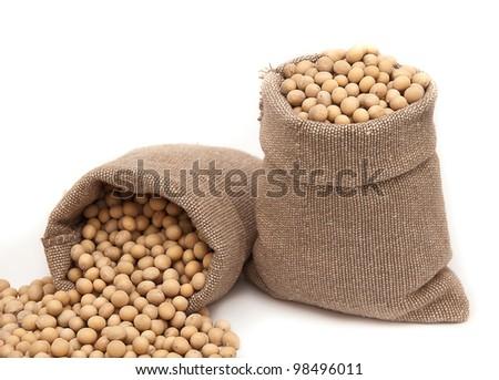 soybean on white background - stock photo