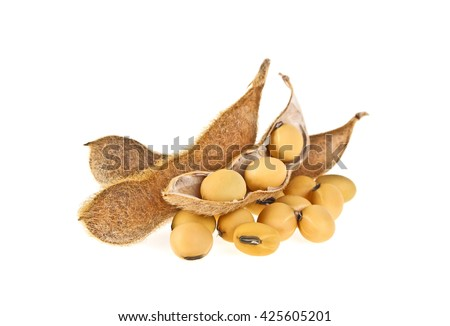 Soybean pods isolated on white background. Soya - protein plant for health food. - stock photo